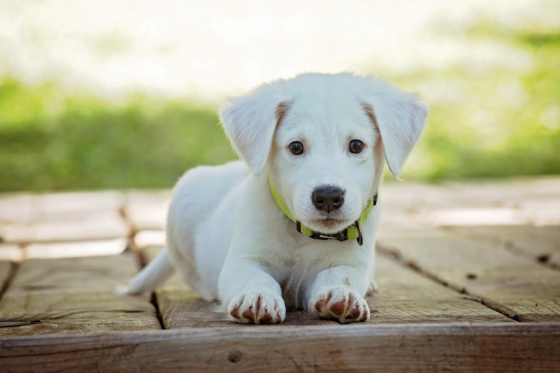 Auch Hunde können von CBD profitieren