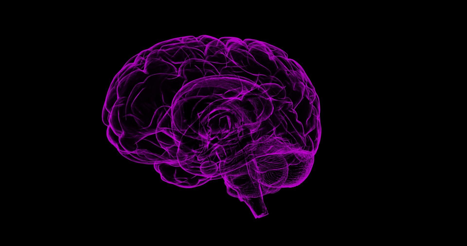 Die CB-1 Rezeptoren sind vorwiegend im Zentralen Nervensystem und Gehirn vorzufinden.