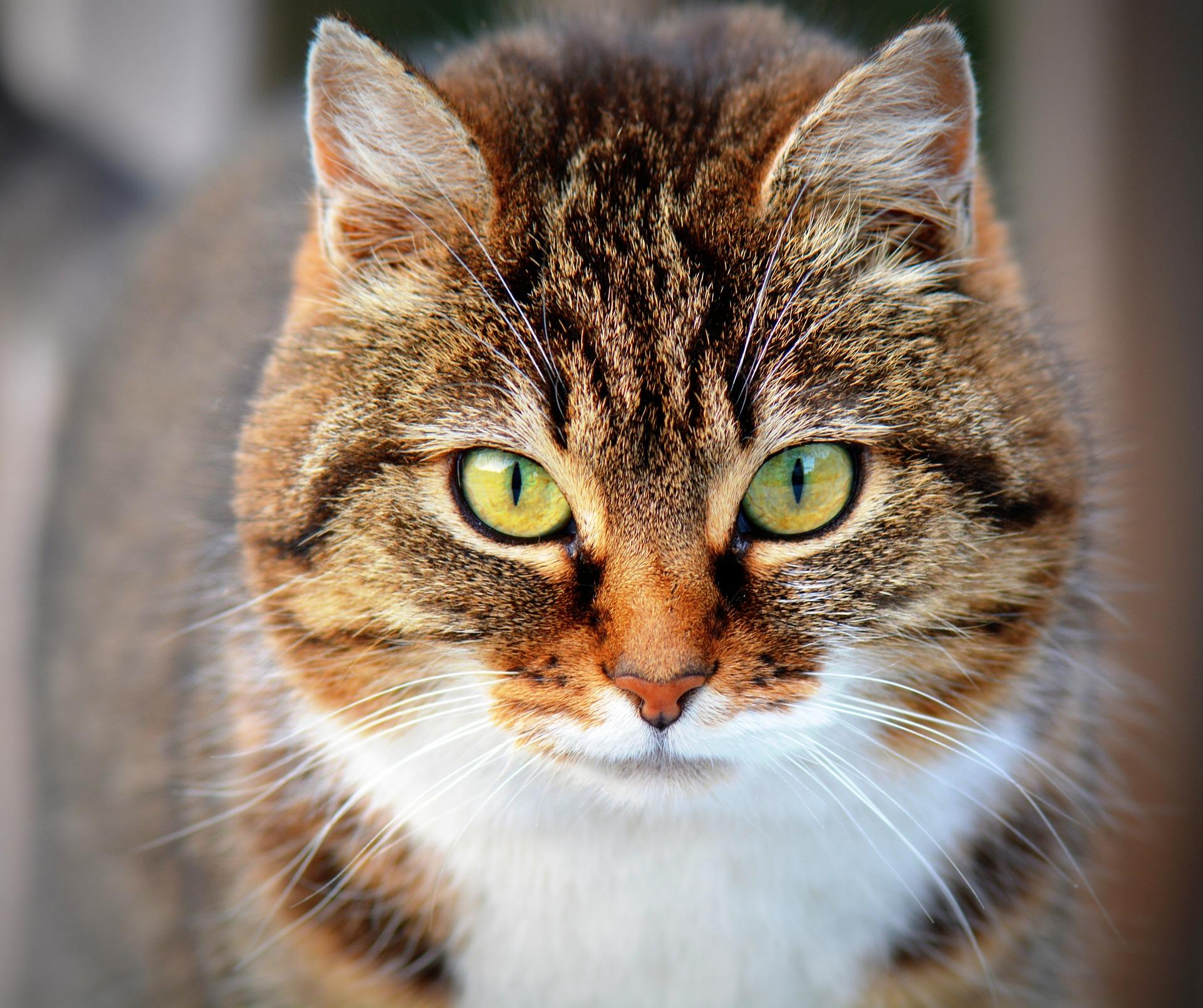 Katzen können Terpene nicht abbauen und sollten nur isoliertes CBD konsumieren.